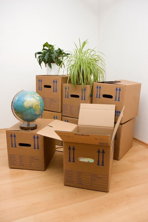Boxes With Plants And A Globe On Top