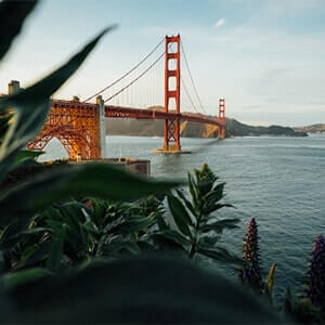 San Francisco's golden gate bridge viewed from an overlook with foliage.