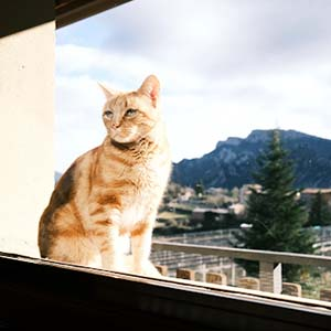 Ginger cat sitting at a window in an apartment with a background view of La Coma region in Spain