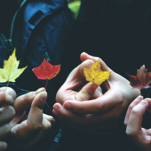 People holding Canadian maple leaves in various colours